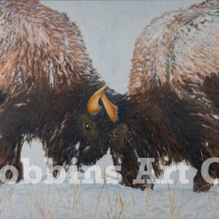 Bison Engagement Oil by Chris Robbins